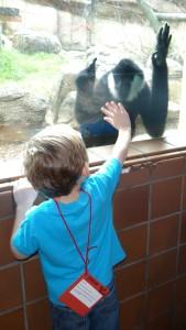 B with monkey